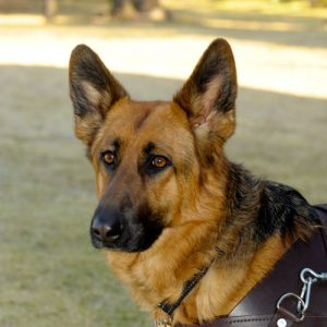South African Guide-Dogs Association For The Blind Bronze Sponsorship