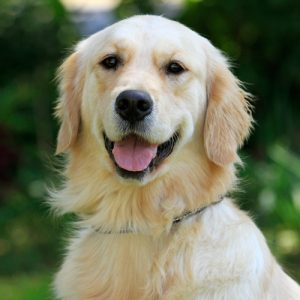 South African Guide-Dogs Association For The Blind Platinum Sponsorship1