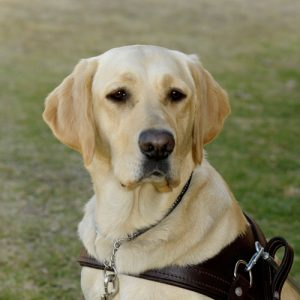 South African Guide-Dogs Association For The Blind Silver Sponsorship