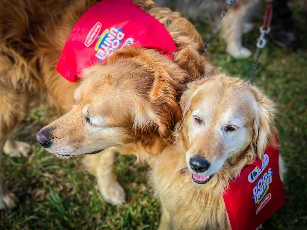 South African Guide-Dogs Association for the Blind | South African